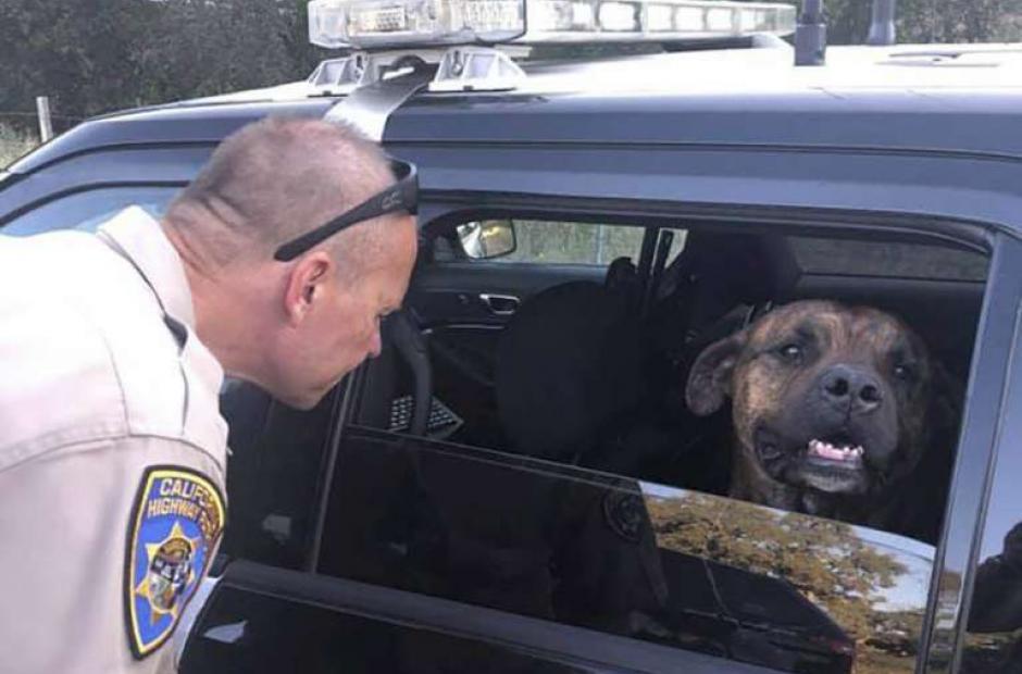 Current News - California Association of Highway Patrolmen